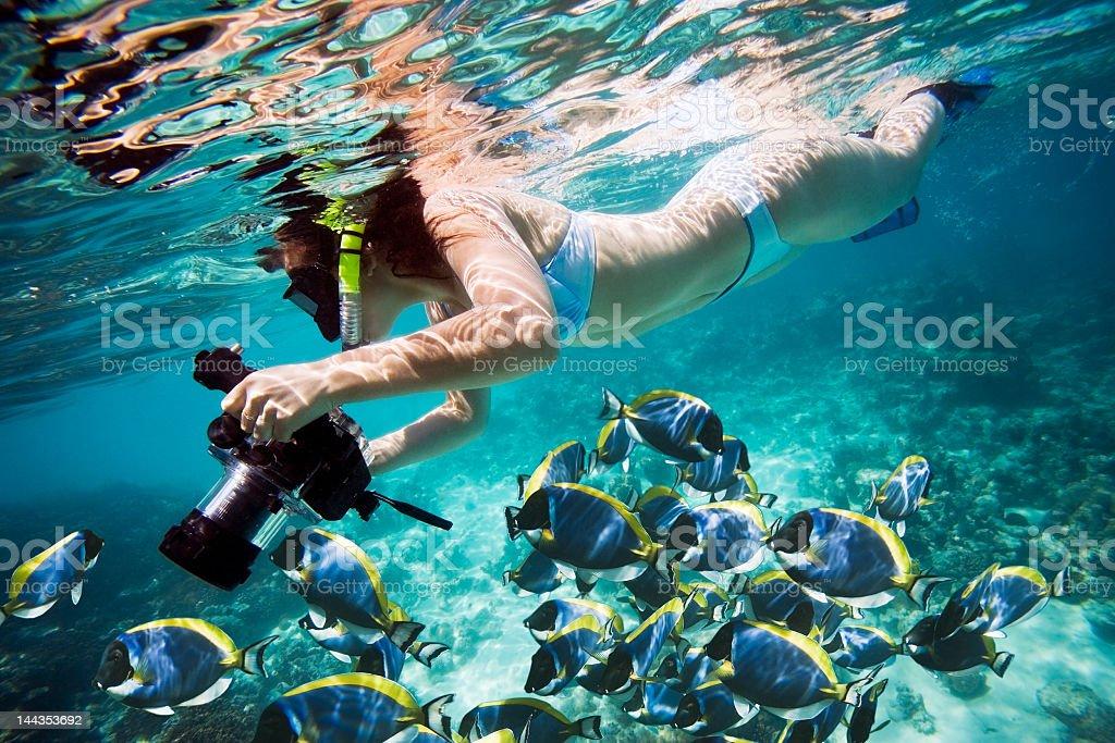 Unterwasserwelt Leben – Foto