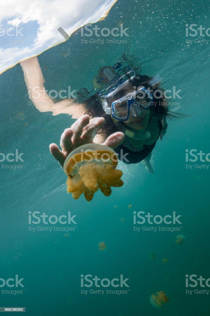 woman snorkeling with Martigias Papua Jellyfish, Jellyfish Lake, Kakaban, Indonesia stock photo