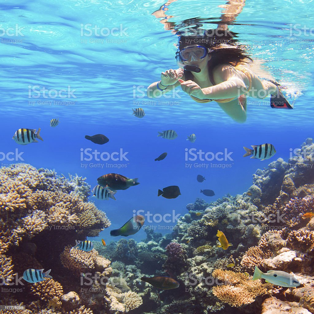 Woman snorkeling with tropical fish and coral reefs stock photo