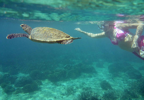 Woman snorkels with green sea turtle Nosy Tanikely Island Madagascar stock photo