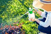 istock Woman spraying flowers in the garden 1092812454