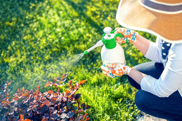 Woman spraying flowers in the garden Woman spraying plants using water pulverizer herbicide stock pictures, royalty-free photos & images