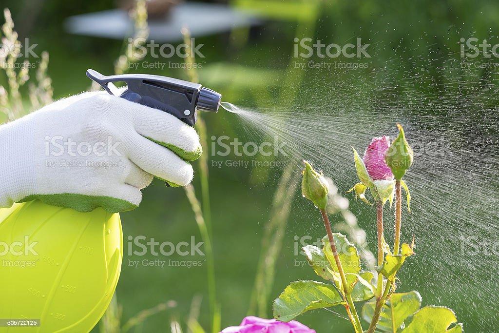 Frau sprühen Blumen im Garten – Foto