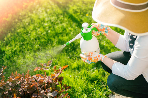 Woman spraying flowers in the garden Woman spraying plants using water pulverizer crop sprayer stock pictures, royalty-free photos & images