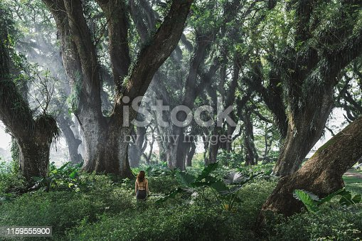 Young Caucasian woman standing among saman tree tunnel in  Jawata Benculuk, Banyuwangi, East Java