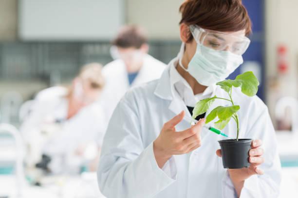 frau, die im labor hält eine pflanze boden chemische hinzufügen - pfannen test stock-fotos und bilder