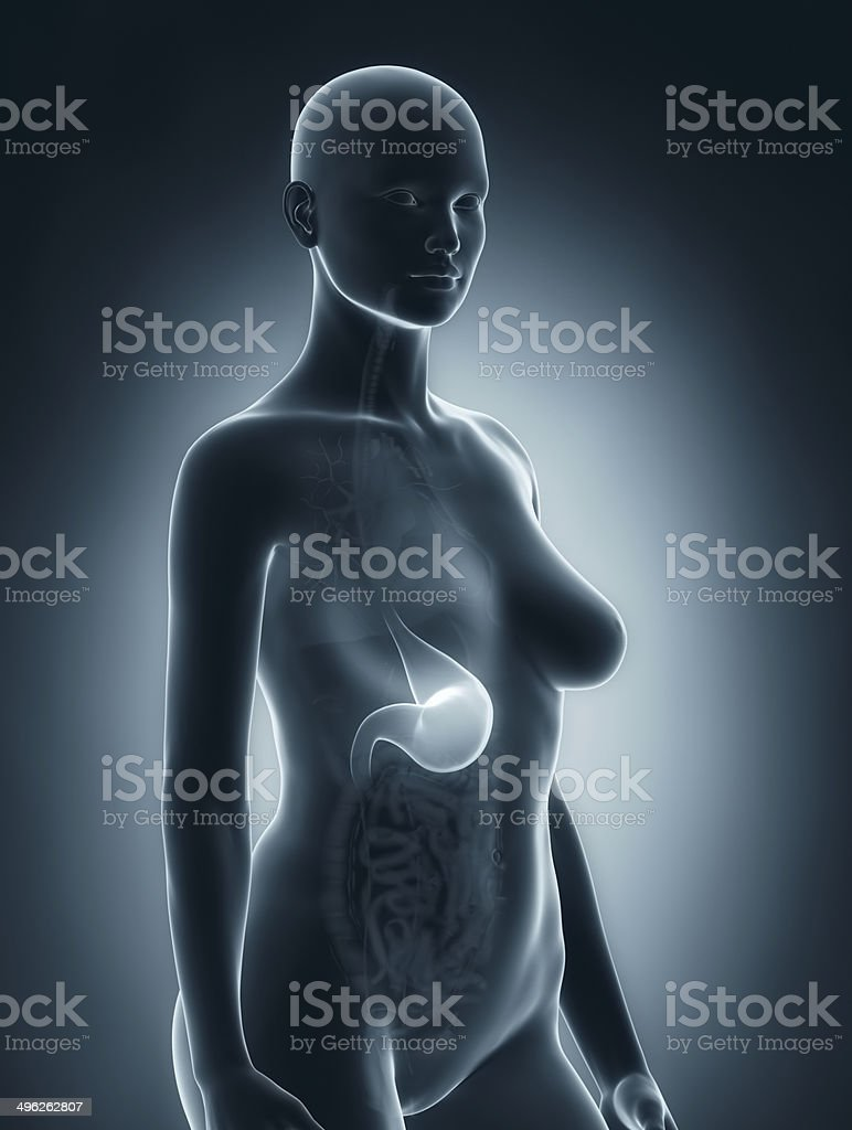 Woman stomach anatomy stock photo