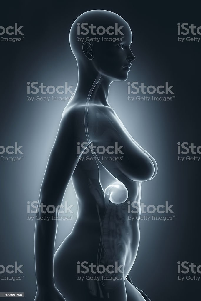 Woman Stomach Anatomy Xray Lateral View Stock Photo & More Pictures ...