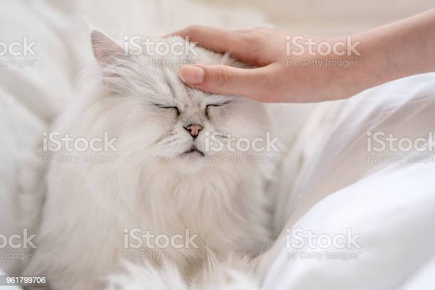 Woman stroke cats head concept of communion with animal picture id961799706?b=1&k=6&m=961799706&s=612x612&h=8efsls4 mtosa gb5myf8cxpwpglfodkylg8uhamotm=