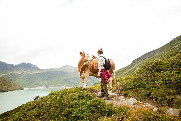 mulher stroking uma vaca, alpes, tirol, áustria - viagem pela vida selvagem - fotografias e filmes do acervo