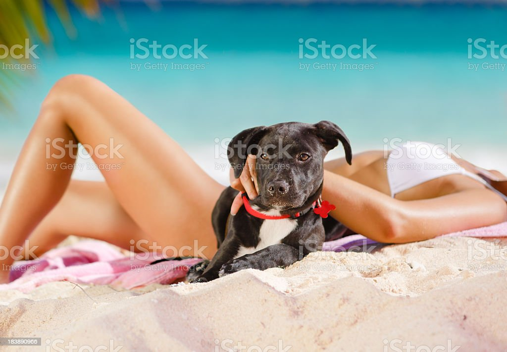 woman sunbathing with a puppy at the Caribbean beach royalty-free stock photo