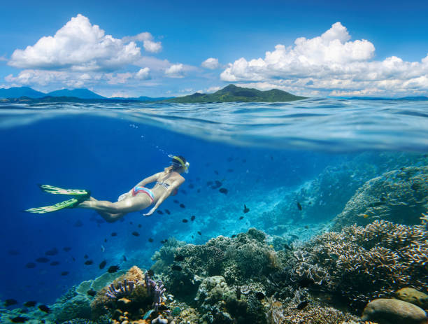 Woman swims around coral reef surrounded by multitude of fish. Woman swims around a coral reef surrounded by a multitude of fish on the background Islands. land feature stock pictures, royalty-free photos & images