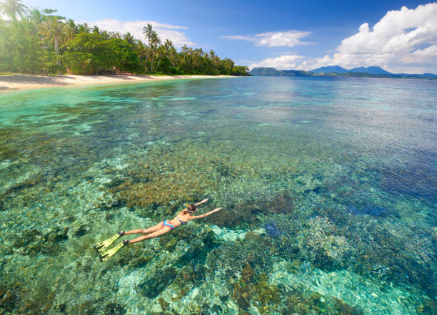 Woman swims with mask and snorkel in clear tropical waters. Young woman in swimsuit snorkeling in transparent tropical sea above coral reef in sunny day.woman in swimsuit snorkeling in tropical sea above corals reef in sunny day. View from above sulawesi stock pictures, royalty-free photos & images