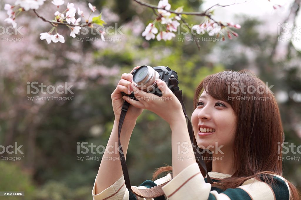 woman takes a picture of blooming cherry blossoms stock photo