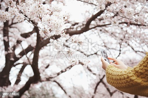 Japanese woman taking a picture of sakura with smartphone.
