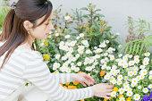 女性のサービスの花