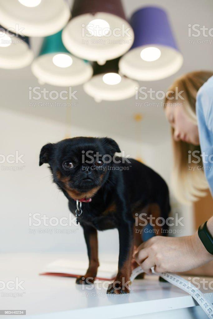Kadın köpeğin vücut ölçümleri alarak - Royalty-free Dikey Stok görsel