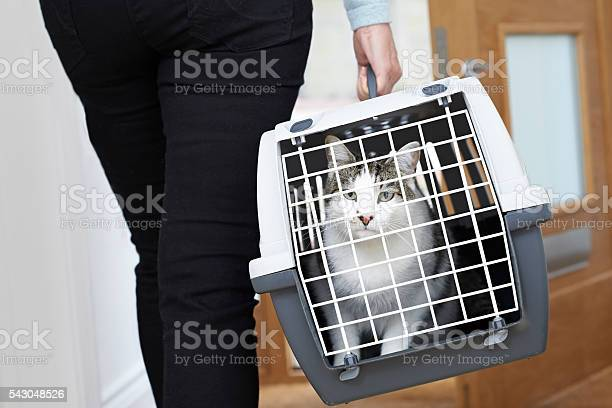 Woman taking pet cat to vet in carrier picture id543048526?b=1&k=6&m=543048526&s=612x612&h=ex9d04lejqmwwn857llgk3a6 17p noekrcnvrlv4pe=