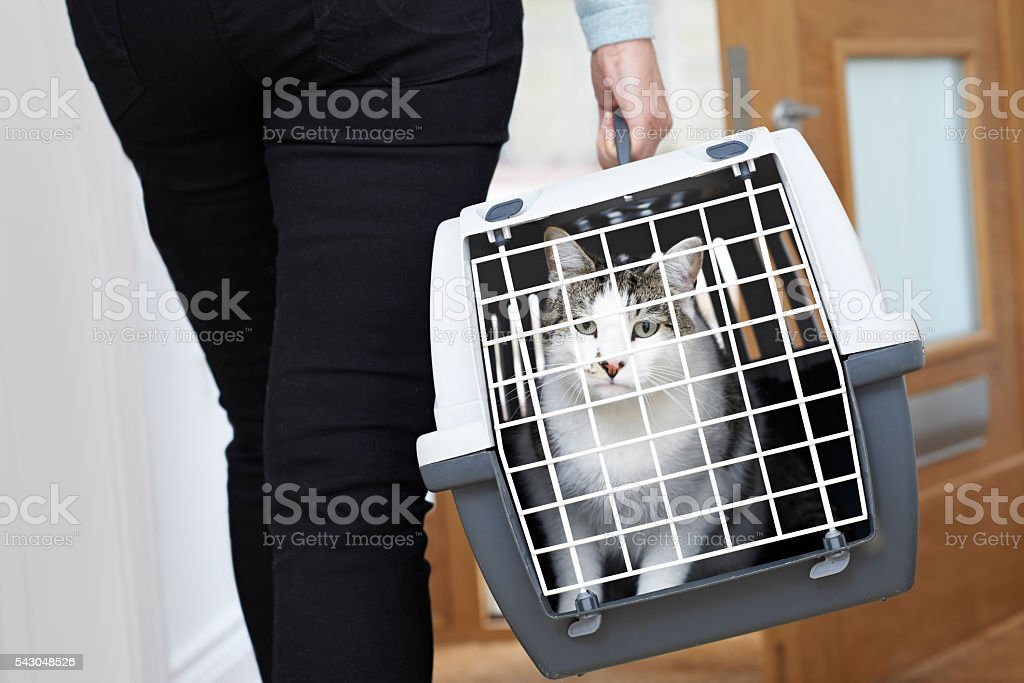 Woman Taking Pet Cat To Vet In Carrier stock photo