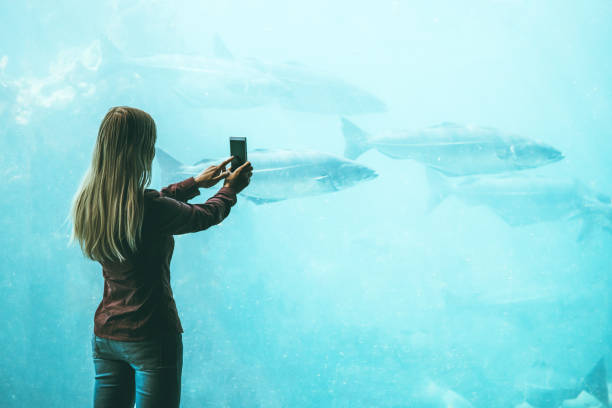 Frau nehmen Foto von Smartphone Fische im großen Aquarium Reisen Lifestyle Konzept moderner Technik – Foto