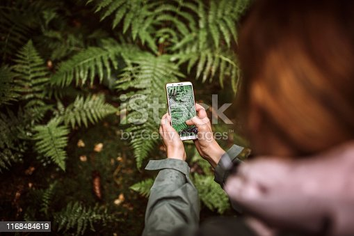 Unrecognizable Woman taking photos with smart phone of fern in forest