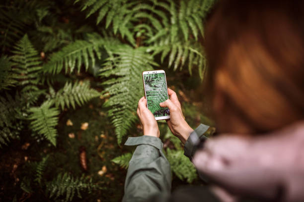 Woman taking photo of fern in forest stock photo