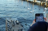 A woman taking photo with her mobile phone of waterfowl on the bank of Lake Zurich. There are pigeons,  swans and coots on and around piers of concrete and wood. An example of a hobby photograph.