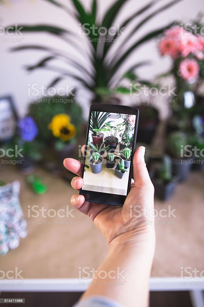 Woman taking photos of her beutiful potted flowers stock photo