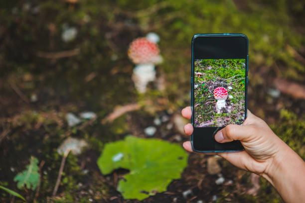woman taking picture on phone of mushroom in forest stock photo