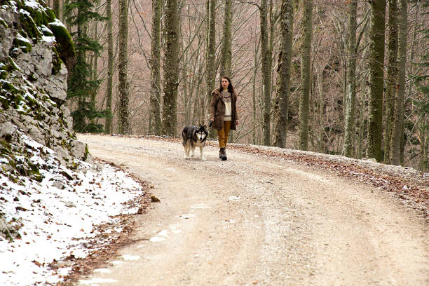 Woman teach obedience an alaskan malamute dog in a winter forest. stock photo