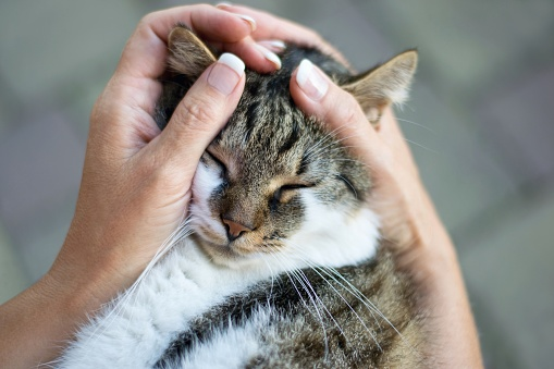 istock Woman tenderly caressing cat, holding her head in hands 1177188147