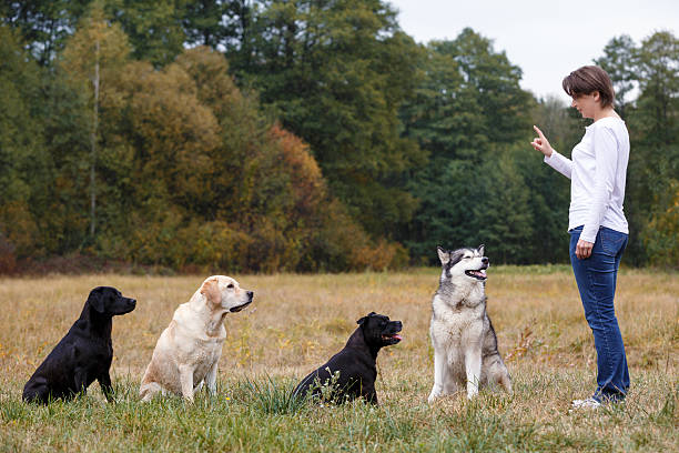 Woman that trains several dogs of various breeds stock photo