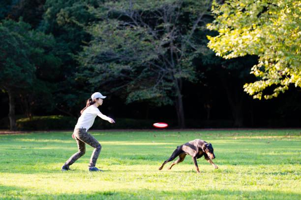 Woman throws a frisbee and plays with doberman picture id1039822572?b=1&k=6&m=1039822572&s=612x612&w=0&h=epppmjg4nwdsw2azklicjnkc1cdgdwgbpcnmlb0hbjc=
