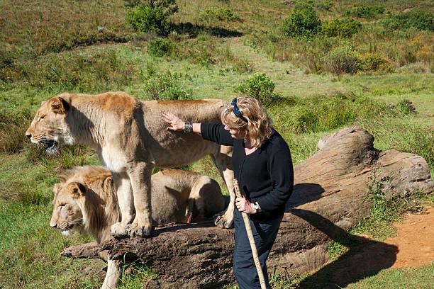 Woman touches a wild lion picture id491147678?b=1&k=6&m=491147678&s=612x612&w=0&h=iex2cn2jqqfg6nxgsb4z4e ay ngca82wvtiz5qva9c=