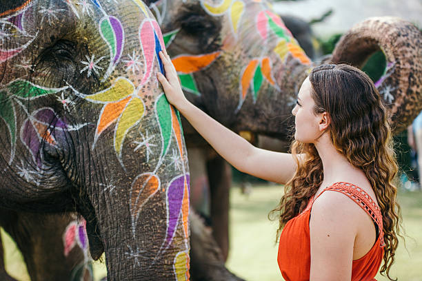 Woman touching a decorated elephant stock photo