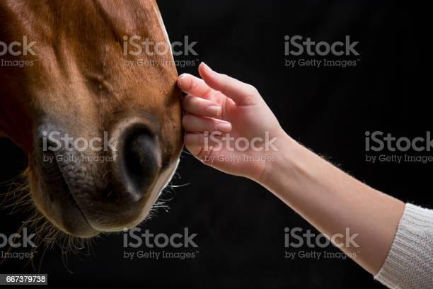 Woman touching horse picture id667379738?b=1&k=6&m=667379738&s=612x612&h=qxekhio8l0ko2e55oaykcivsa9f25ooovlwiau8jj5g=