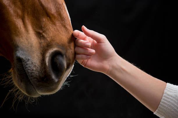 Woman touching horse picture id667379738?b=1&k=6&m=667379738&s=612x612&w=0&h=nlckum xg34u1mym24dctwkz i7yvcskt8pthm1p8a0=