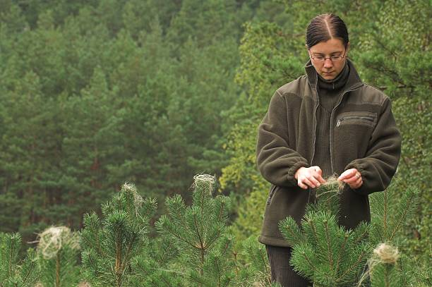 Woman touching some plant in a forest forester protect trees from damage by deer forester stock pictures, royalty-free photos & images