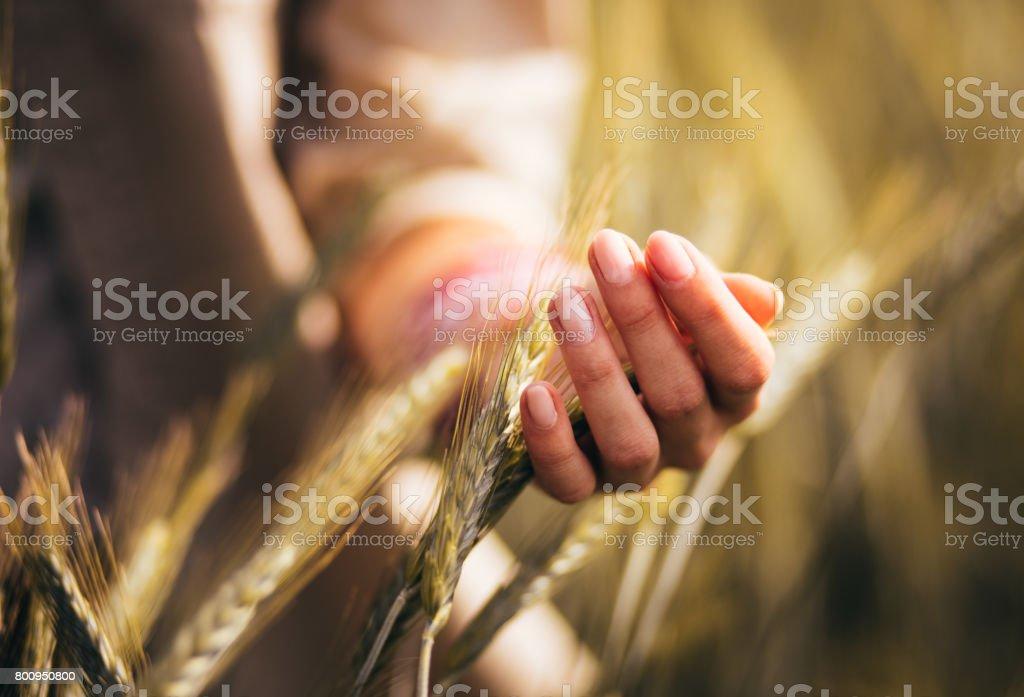 Femme, toucher les têtes de blé dans un champ cultivé - Photo