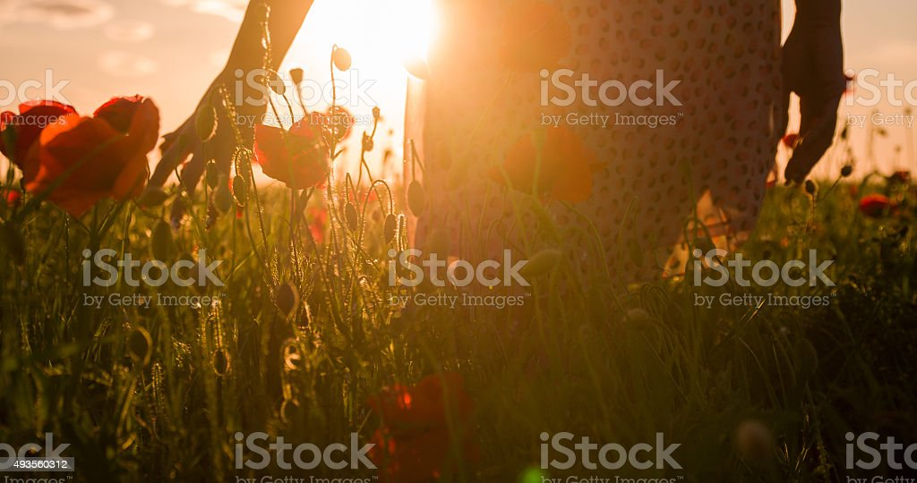 Woman Touching The Poppy Flowers stock photo