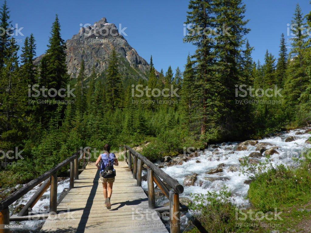 Woman trail running Portal Creek Trail South Jasper Range mountains Jasper National Park Alberta stock photo