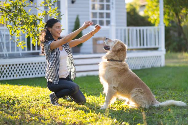 mujer entrenando a un perro en el patio trasero - dog fotografías e imágenes de stock
