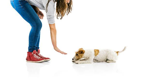 Woman training dog isolated picture id521726163?b=1&k=6&m=521726163&s=612x612&w=0&h=xrckuofjkk2xwkpad2namwkchjc1fc0kqfajjakiy m=