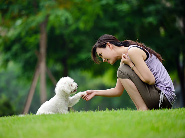 Woman Training Dog Shaking Hand and Communication- XXXXXLarge Woman Training Dog Shaking Hand and Communication animal hand stock pictures, royalty-free photos & images