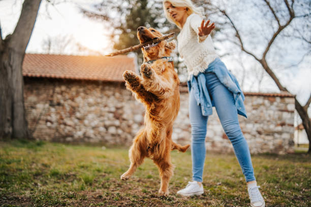 Woman training her dog picture id1138608384?b=1&k=6&m=1138608384&s=612x612&w=0&h=0bkdfnbtj7vqzmdqma9covq0p0yb iw7ukswqwd1jxy=