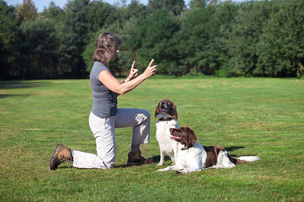 Woman training her two dogs picture id602330930?b=1&k=6&m=602330930&s=612x612&w=0&h=4eqyuduujh26to3 rg6v0db hramtwkqvc4und2khjy=