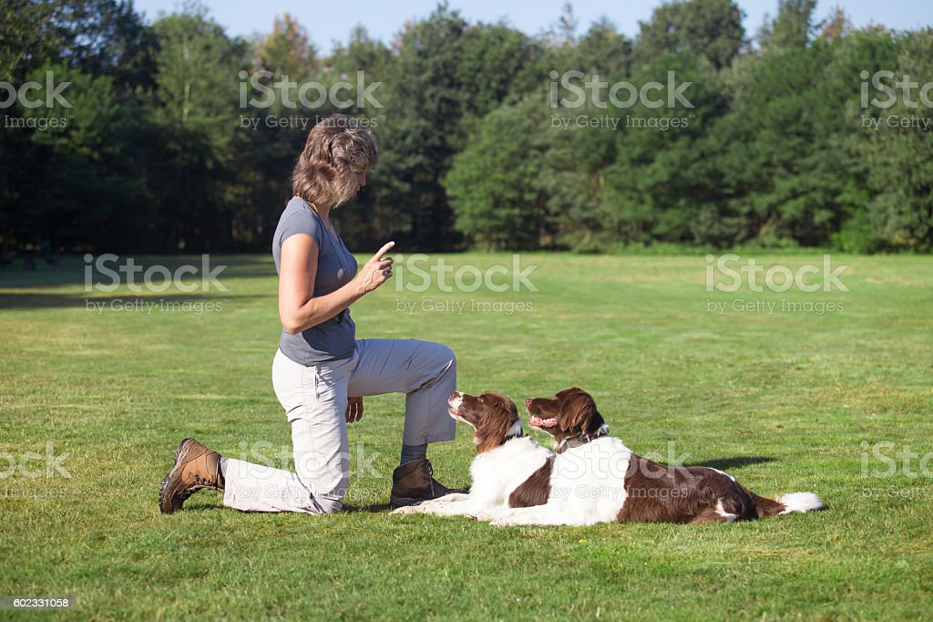 woman training two dogs in a meadow stock photo