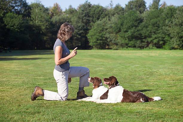 woman training two dogs in a meadow - wortarten bestimmen übungen stock-fotos und bilder