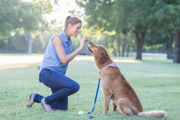 woman trains her dog in the park - training imagens e fotografias de stock