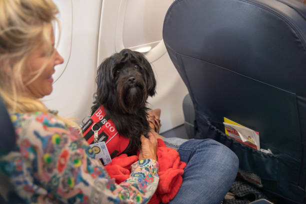 Woman traveling with a support dog. stock photo